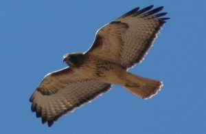 Taken at Rockhound State Park NM